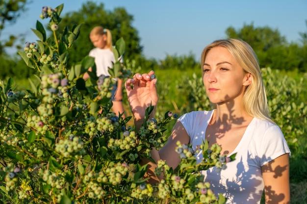 Молодая мать с дочерью собирают чернику на органической ферме
