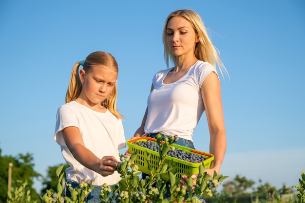 Young mother with her daughter picking blueberries on organic farm