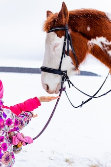 A young mother with her little daughter in winter clothes feed a white and brown horse