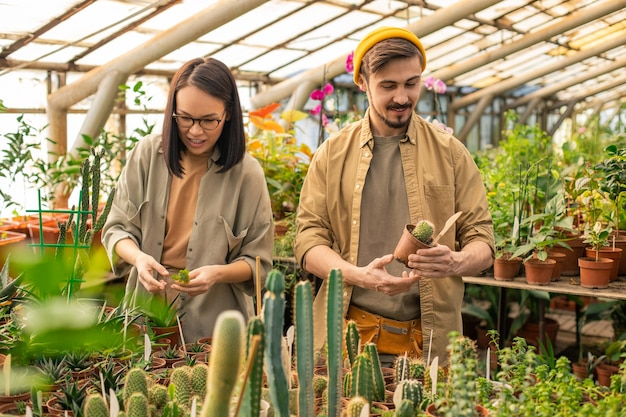 Young multi-ethnic nursery employees standing at cactus plants and checking it while working at greenhouse farm