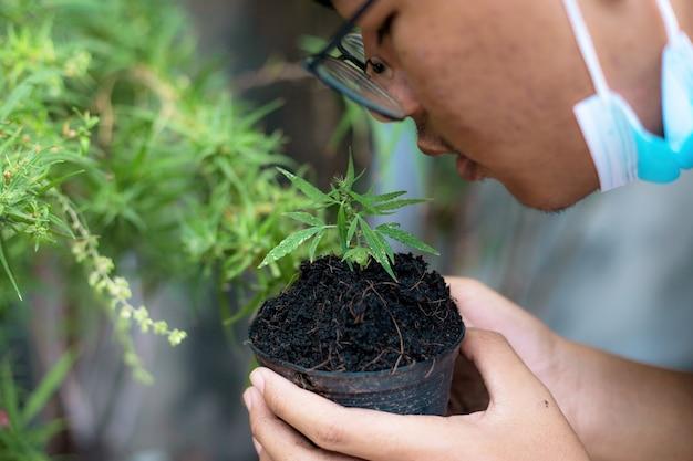 医学研究者の若者は、庭の鍋に大麻の苗を持っています。