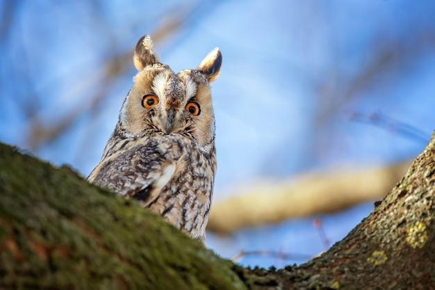Сова сидит на дереве и смотрит в камеру