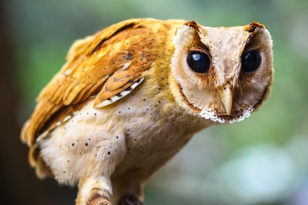Молодая сова стоит начеку в дикой природе.