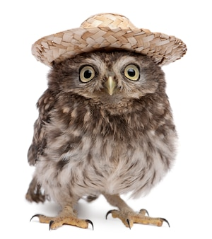 Young owl wearing a hat on white isolated