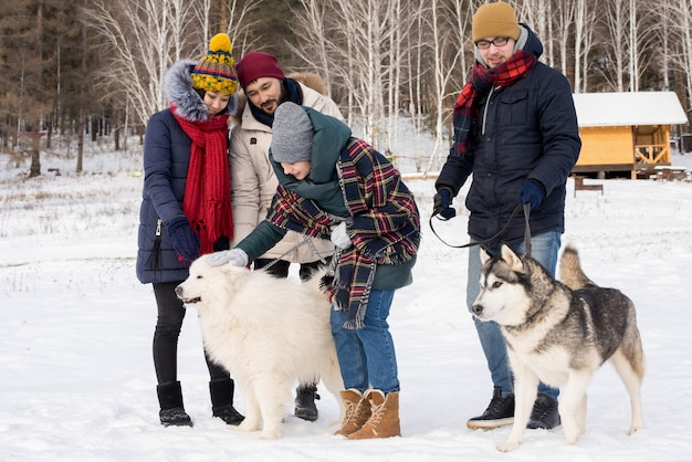 Young people playing with husky dogs