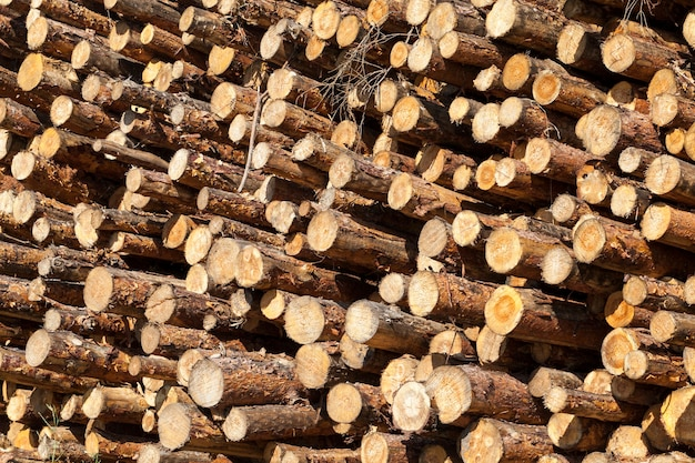 Young pine wood harvested for processing, europe, plant parts piled in heap