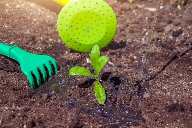 Young plant on black soil and garden equipment: baby rake and watering can. environment earth day. save planet and new life concept.