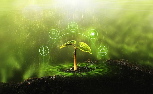 日光の下で成長する若い植物。環境とエコロジーの概念。再生可能で持続可能な開発のための情報源。