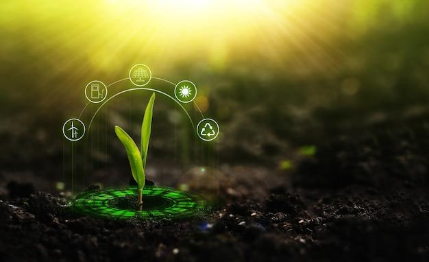 햇빛에서 자라는 어린 식물 환경 및 생태 개념 재생 가능한 소스