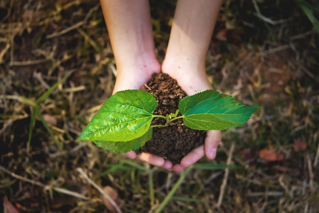 Young plant growing on hand with grass background. eco concept earth day