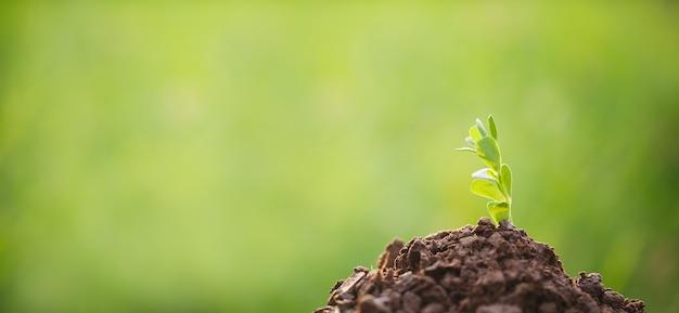 Молодые растения в саду с зеленым размытым фоном