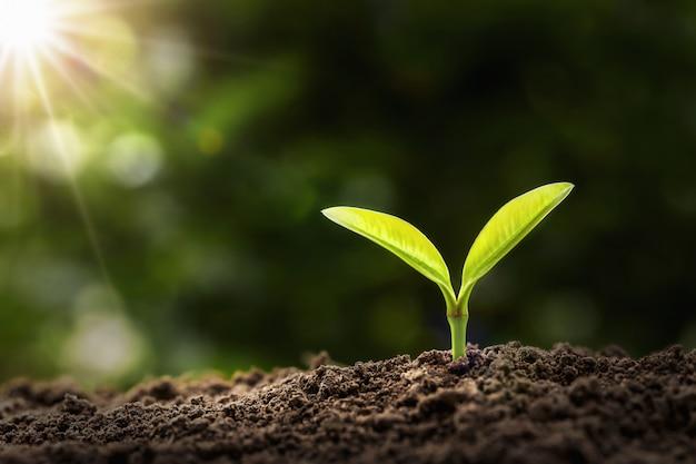 朝の光で成長している若い植物。農業と地球の日の概念 Premium写真