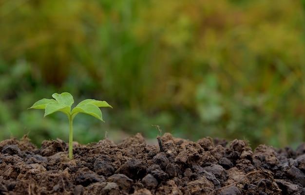자연 속에서 자라는 어린 식물