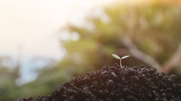 Молодые растения, растущие на фоне солнечного света, рассада растений