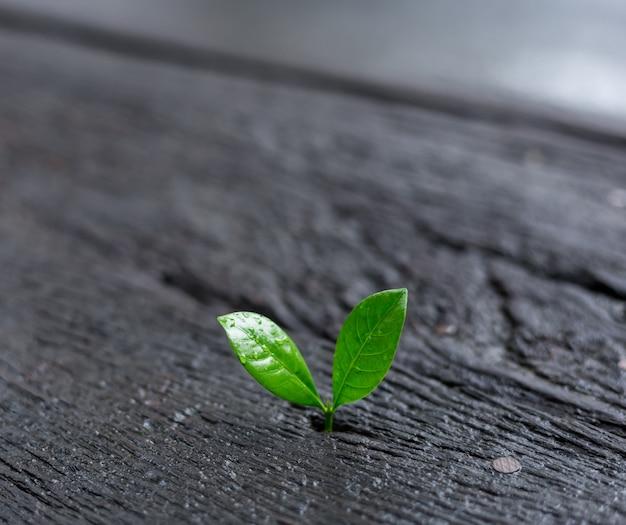 Молодое растение растет в утреннем свете