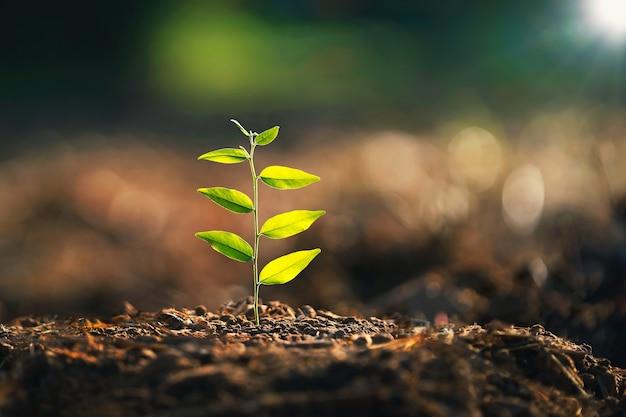 자연 속에서 햇빛으로 흙에 자라는 젊은 식물. 에코 지구의 개념