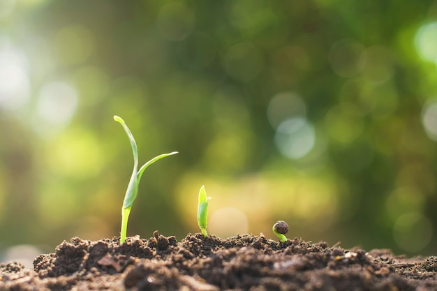 Young plant growing step. agriculture concept in garden