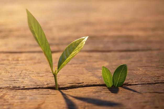 日光と木の板を通して成長している若い植物