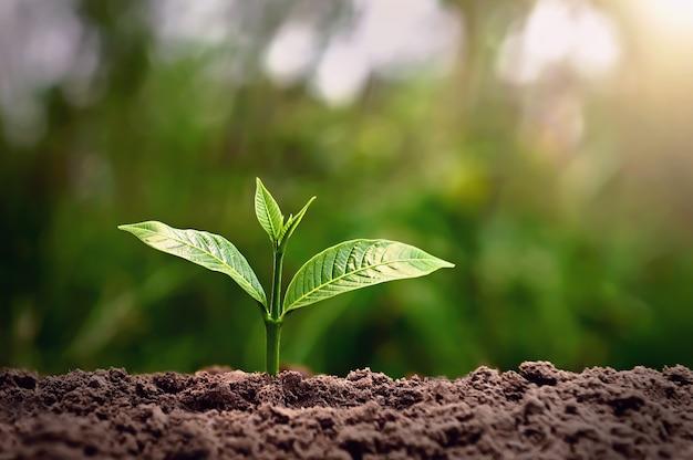 自然の中で日光とともに育つ若い植物。農業と地球の日のコンセプト