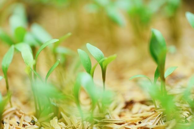 ニュートラルグリーンで若い植物の成長