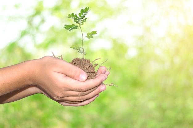 Молодое растение в руках ребенка.
