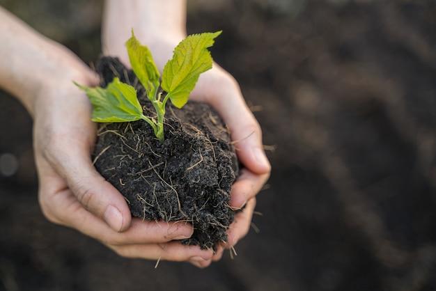 手に若い植物、エコロジーと環境の概念。