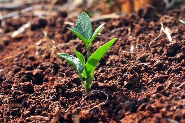 Молодое растение в почве