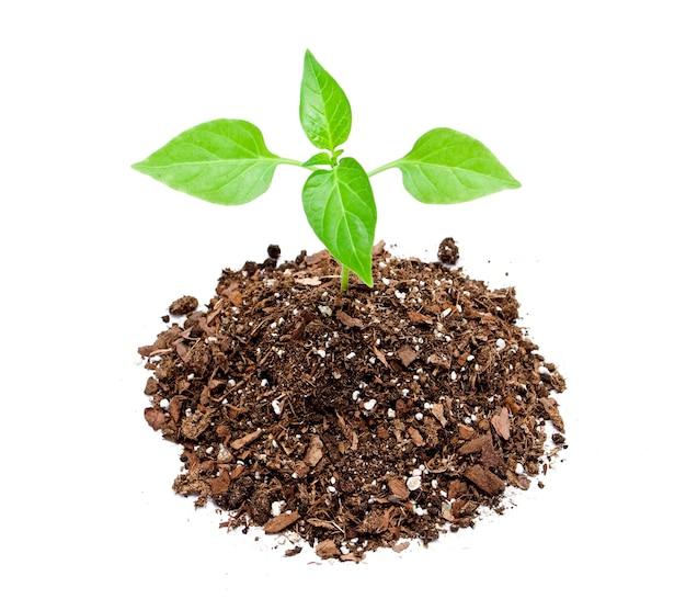 흰색 바탕에 어린 식물