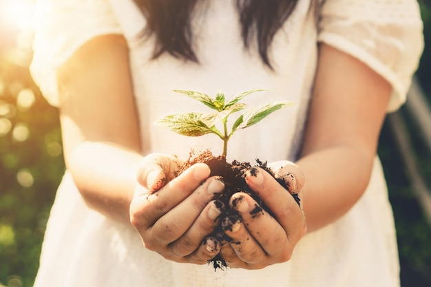 女性の手で若い植物の木の芽。