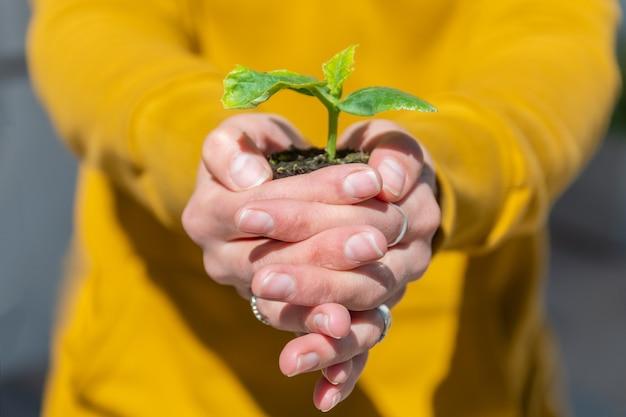 아름 다운 여자 손에 토양에 녹색 잎을 가진 젊은 식물