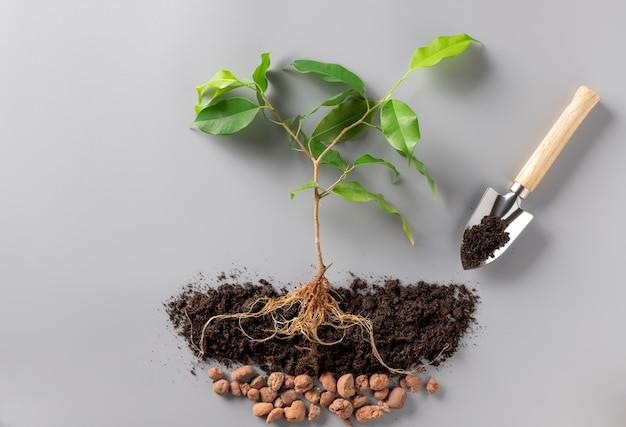 Молодое растение с почвой, дренажем и лопатой. выращивание растений.