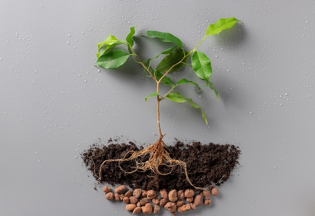 Young plant with soil and drainage. world earth day.