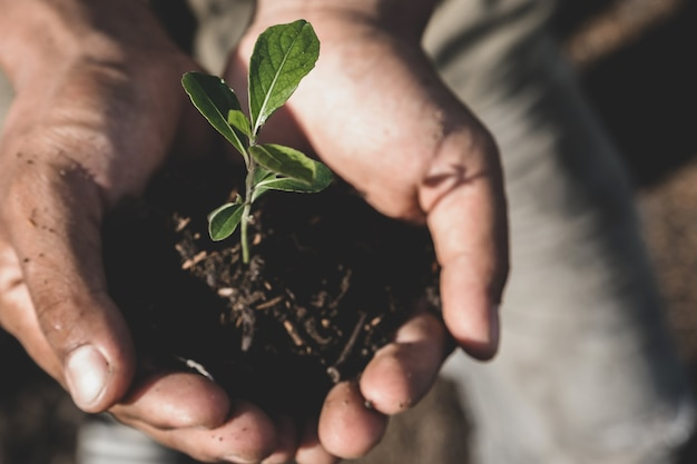 若い植物と農民の手に持っている土壌は、コンセプトエコアースデイを植える準備ができています。
