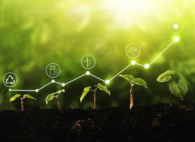 再生可能エネルギーのための増加グラフとアイコンエネルギー源で日光の下で成長する若い植物