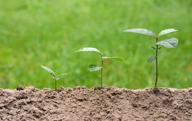 Young plants is growing in step on green nature background.
