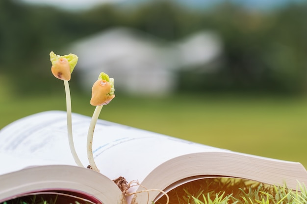 Young plants seeding growing on textbook