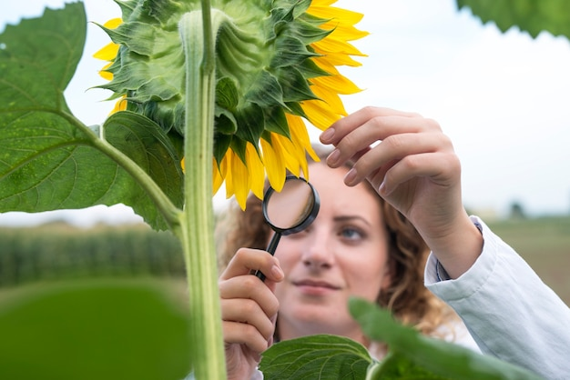 Young pretty expert agronomist in the sunflower field checking crops quality