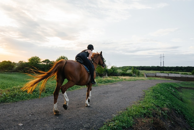 A young pretty girl jockey riding a thoroughbred stallion is engaged in horse riding at sunset. equestrian sports., horse riding.