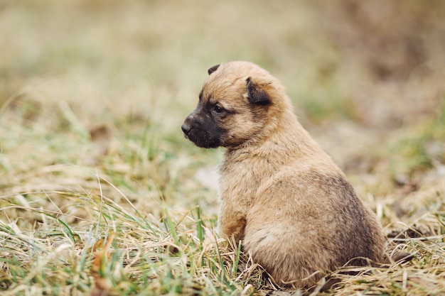 Young puppy waits for master outdoor