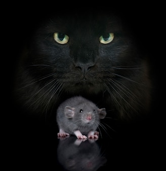 Young rat and cat