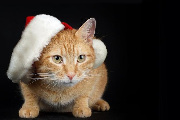 分離されたクリスマスサンタキャップを持つ若い赤い子猫