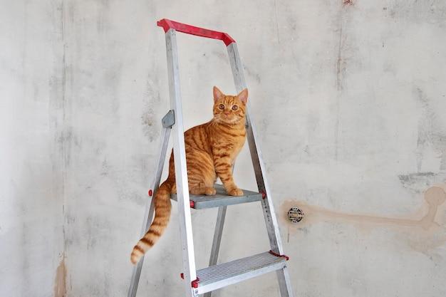Молодой рыжий полосатый кот сидит на верхней ступеньке стремянки