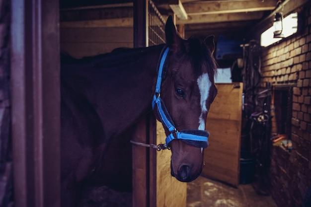 Молодая верховая лошадь в конюшне.