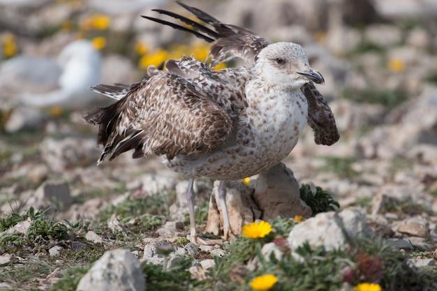 Молодые чайки возле скал