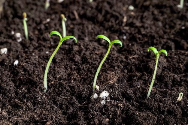 種子の若い苗。植物の若い苗。