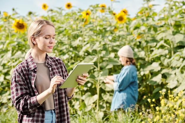 작업복을 입은 젊은 여성 농부가 카메라 앞에 서서 해바라기 밭과 일하는 성숙한 여성에 대해 디지털 태블릿을 사용합니다.
