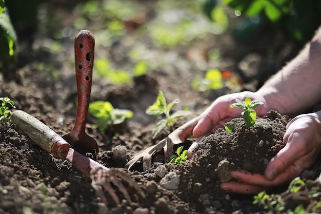 손에 땅에 착륙을 위한 어린 작은 새싹