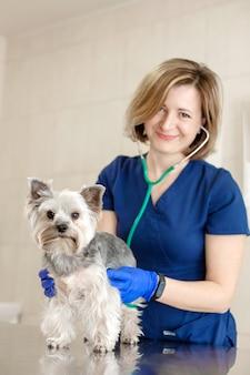 젊은 미소 전문 수의사 여자 시험 개 품종 요크셔 테리어 청진기를 사용합니다.