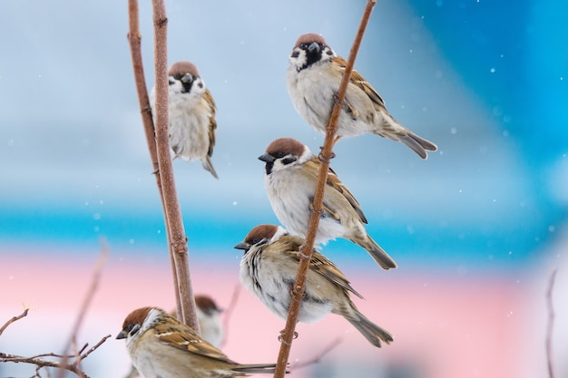 Young sparrow on branch