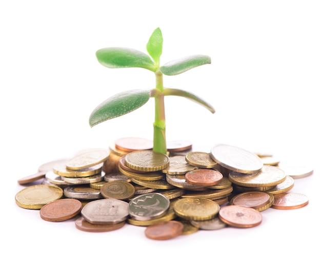 Молодой росток из кучи монет. концепция инвестиций.